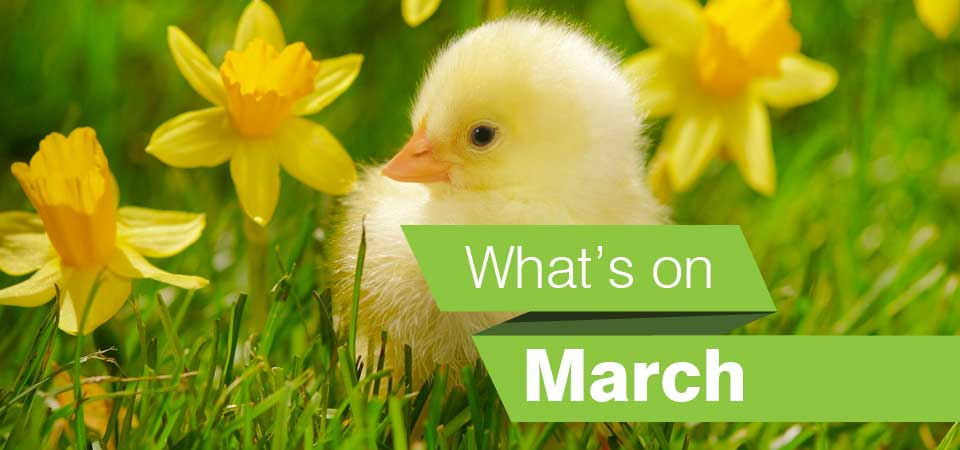 Whats on in the borough in March