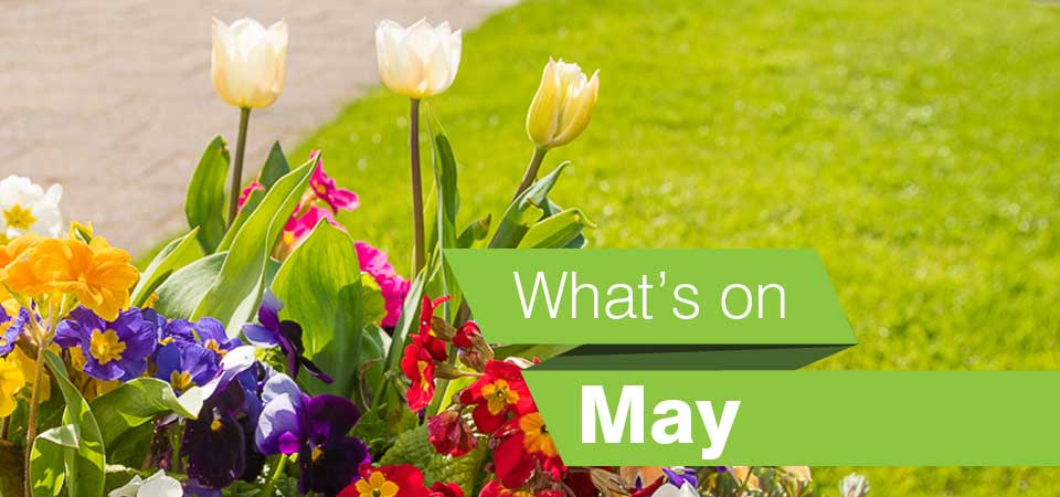 Whats on in the borough in May